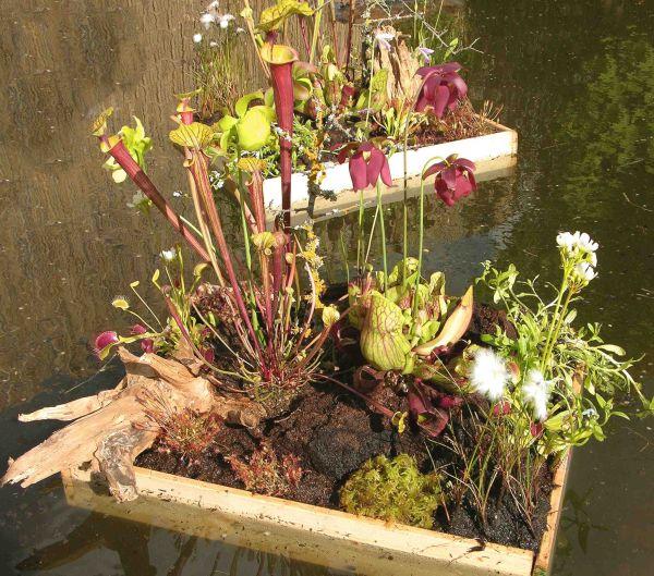 gartenbau thomas carow spezialg rtnerei f r fleischfressende pflanzen kulturorte. Black Bedroom Furniture Sets. Home Design Ideas